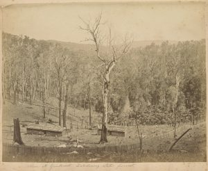Gembrook about 1880. Fred Kruger photographer. Photo courtesy of The State Library of Victoria.
