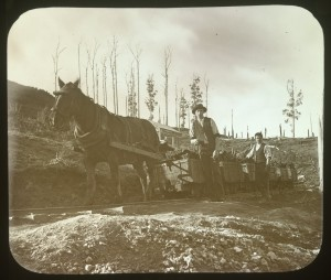 Pit pony hauling a rake of loaded coal skips at the Outrim Coal Mine (near Wonthaggi) in 1897. Photo by John Henry Harvey, courtesy of The State .Library of Victoria