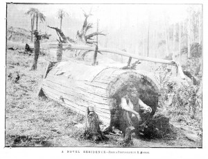 A Hoolow Log Similar to one that John Sackfield Lived In. Photo Courtesy of The State Library of Victoria